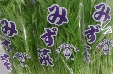 京菜の一種 水菜