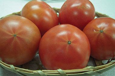 静岡県掛川市の石山農園 フルーツトマト特選(品種 桃太郎ファイト)