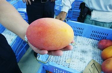 『 果物の女王様 』